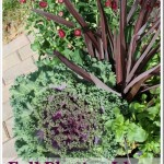Fall Planter Ideas[7]