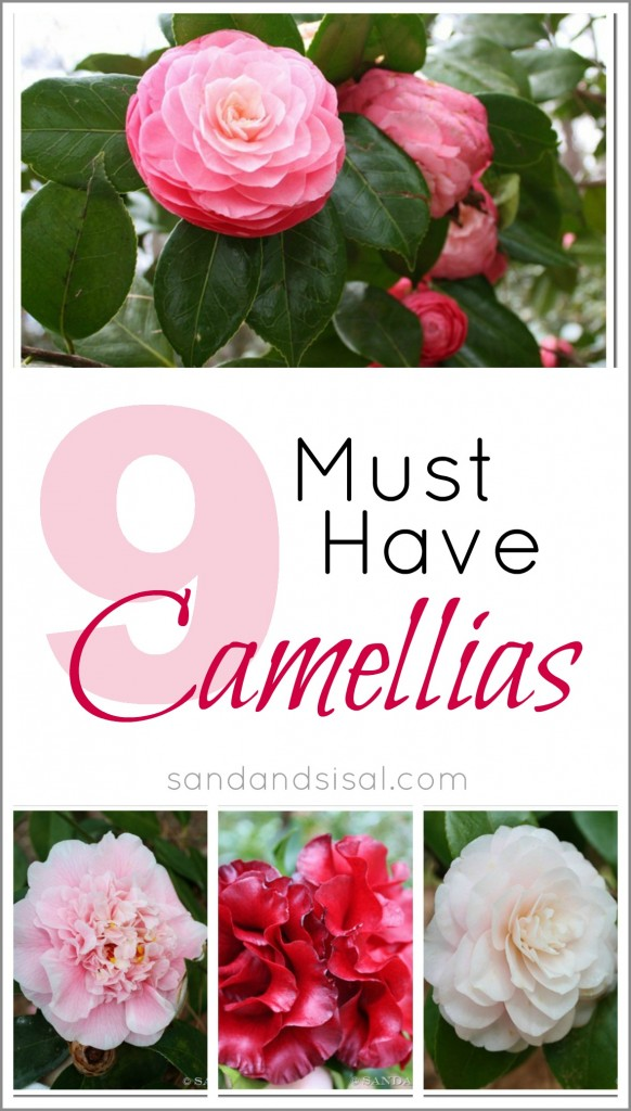9 Must Have Camellias by Sand and Sisal