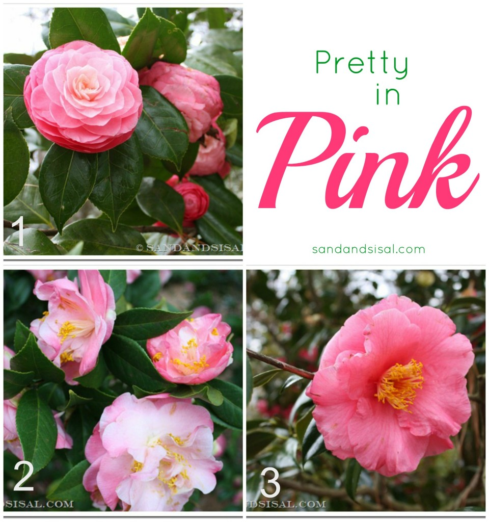 Best Pink Camellias