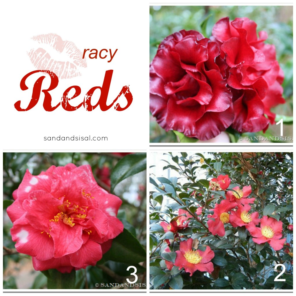 Best Red Camellias