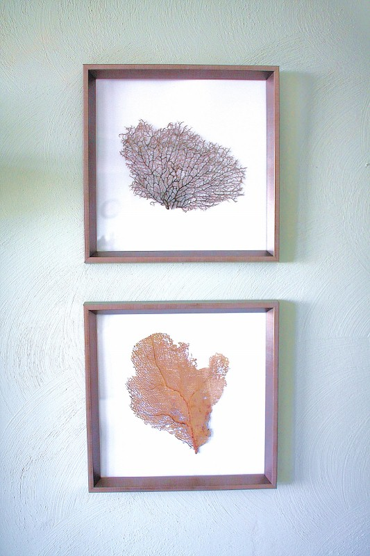 DIY Sea Fan Art