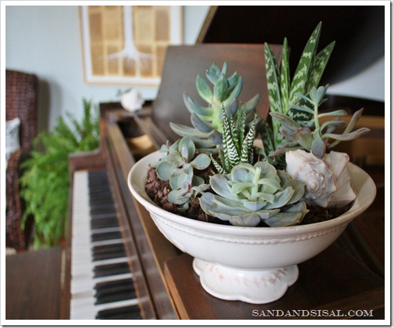 Creative Containers - Succulents in Soup Terrine