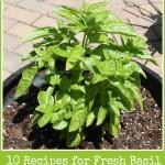 10 Recipes for Fresh Basil
