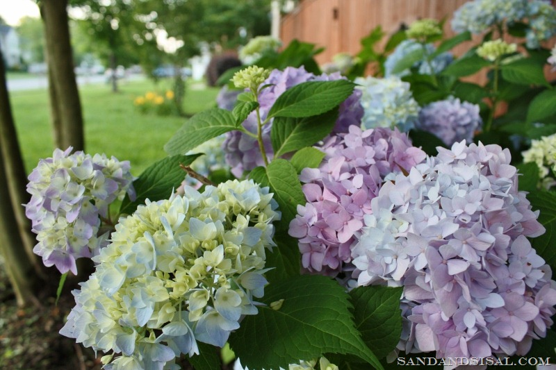 how to dry hydrangeas sand and sisal. Black Bedroom Furniture Sets. Home Design Ideas