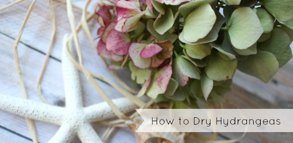 How to dry hydrangeas slide