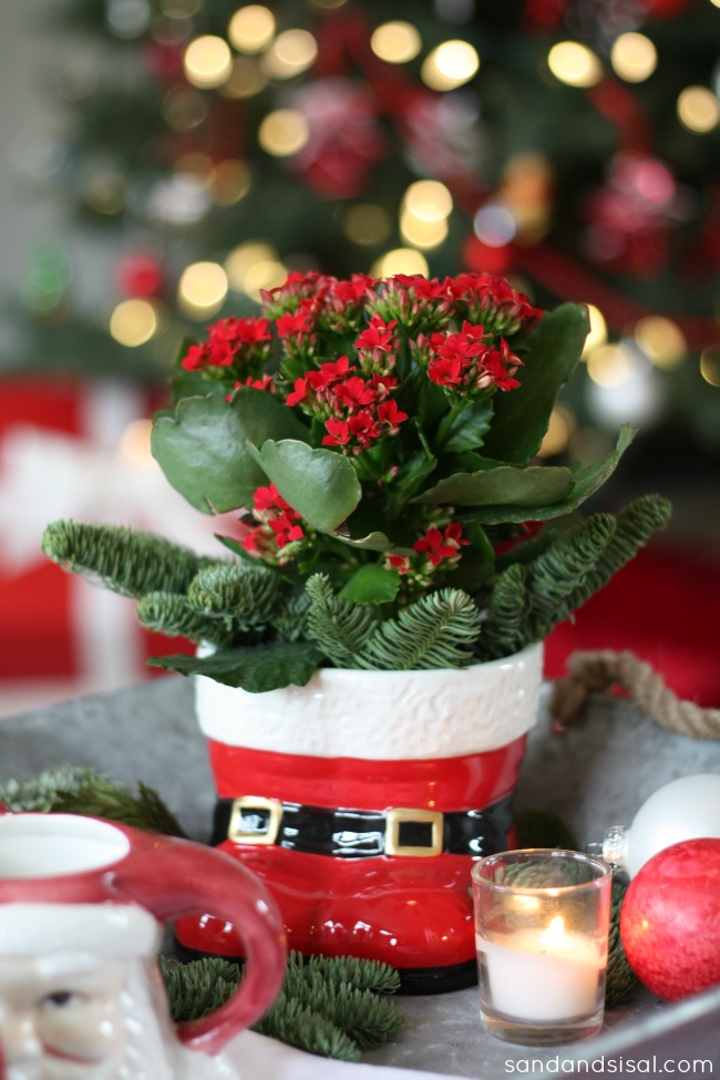 Santa Boots Planter with Red Kalanchoe