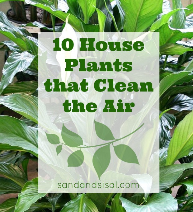 10 Houseplants That Clean The Air Sand And Sisal