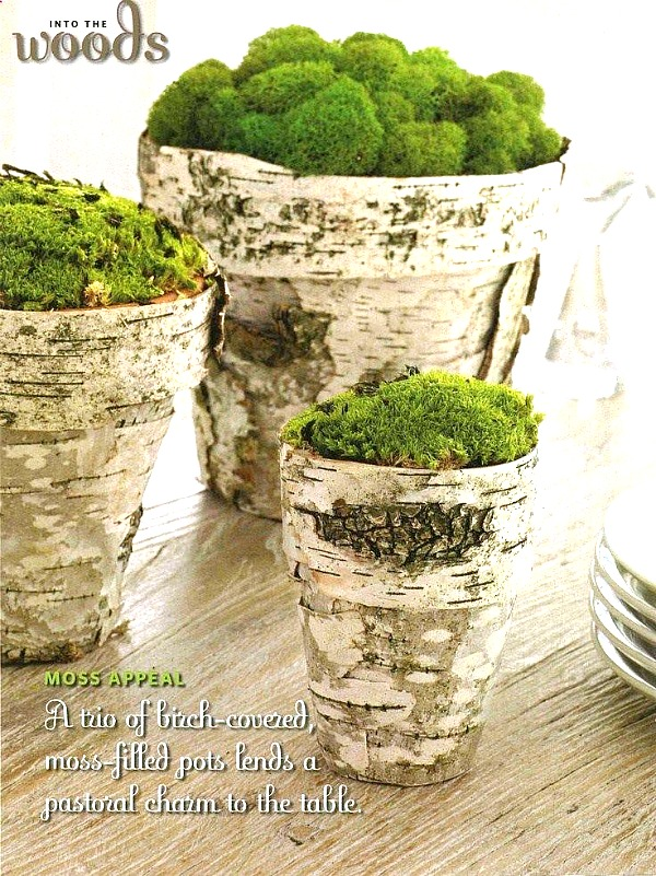 Birch Bark Terracotta Pots