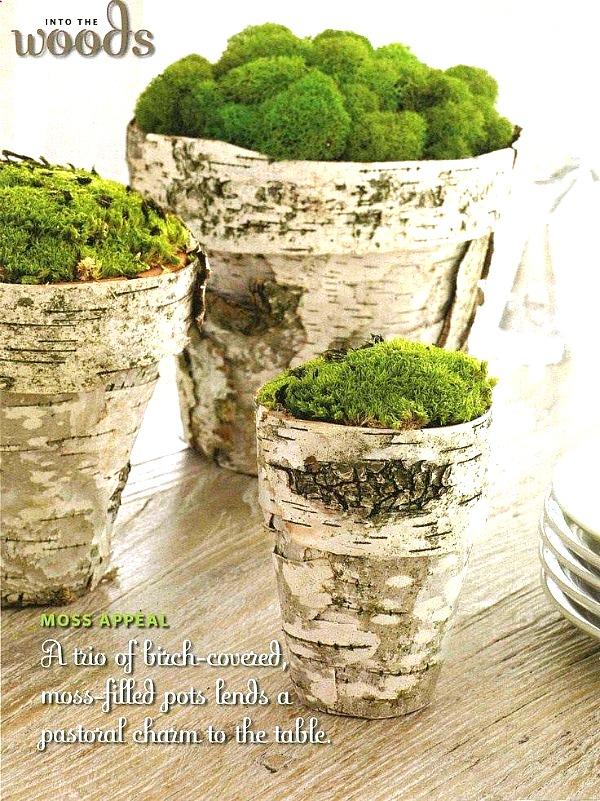 Birch Bark Terracotta Pots