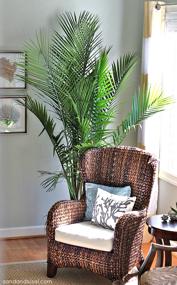 10 houseplants that clean the air page 2 of 11 sand for Indoor plants living room ideas