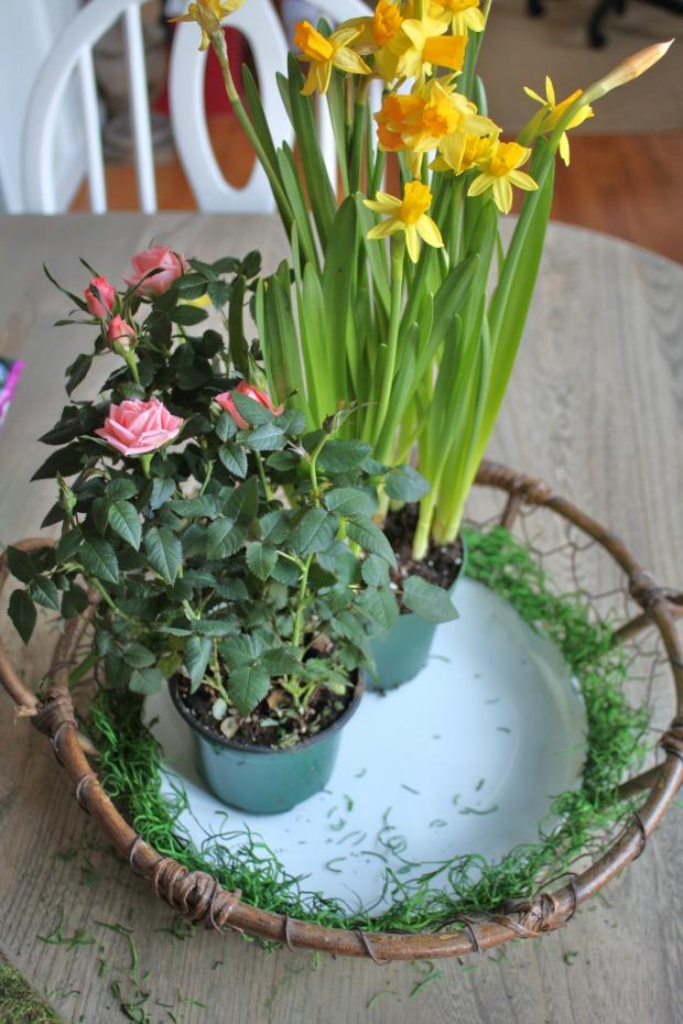 Make a spring tabletop garden