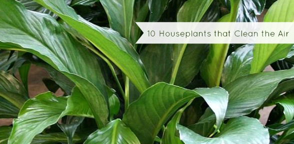 Plants that Clean the Air slide