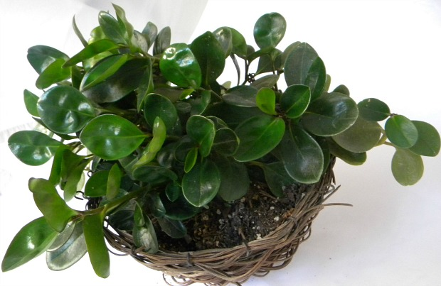 10 Houseplants That Clean The Air Page 6 Of 11 Sand