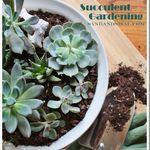 Succulent Gardening thumnail