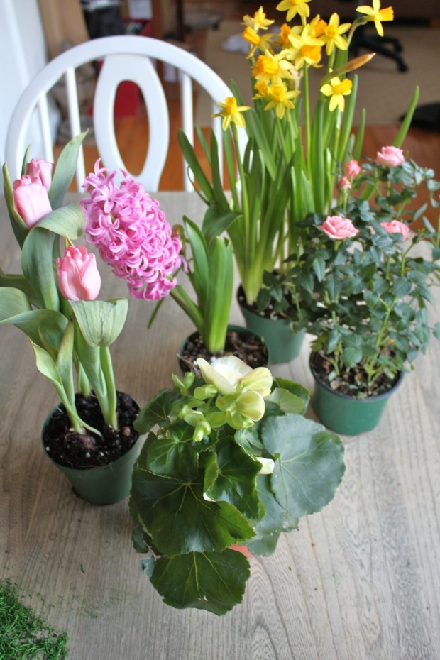 spring potted plants