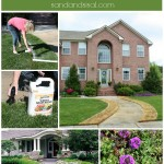 Tips for Preparing a New Flower Bed