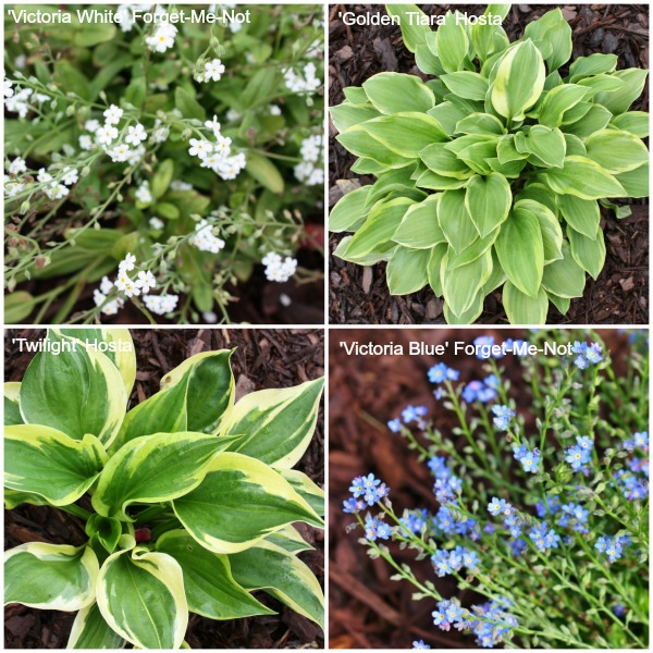 Plant combinations for flower bed