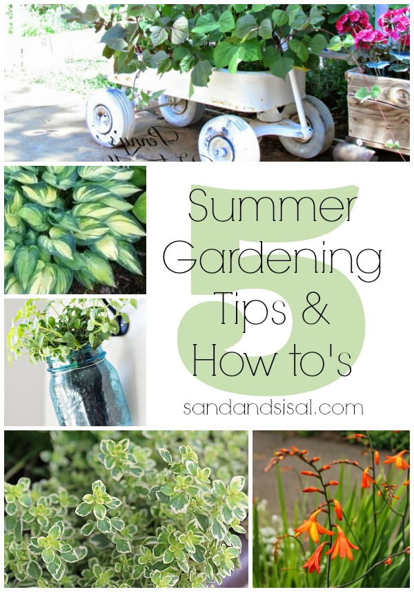 5 Summer Gardening Tips & How to's