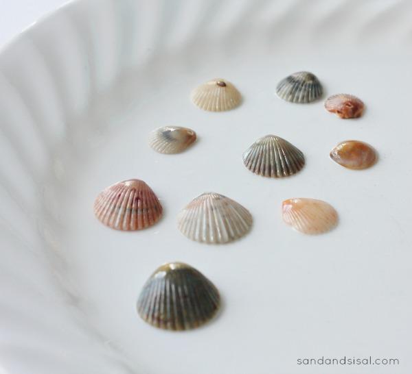 Gilding Shells