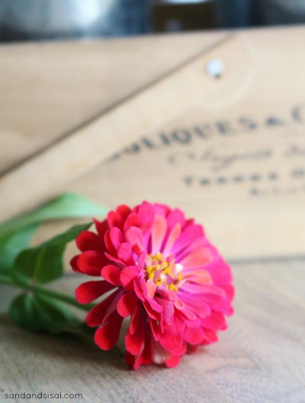 Zinnia - single flower