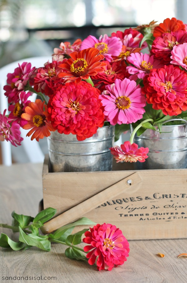 Zinnias in Galvanized Pails
