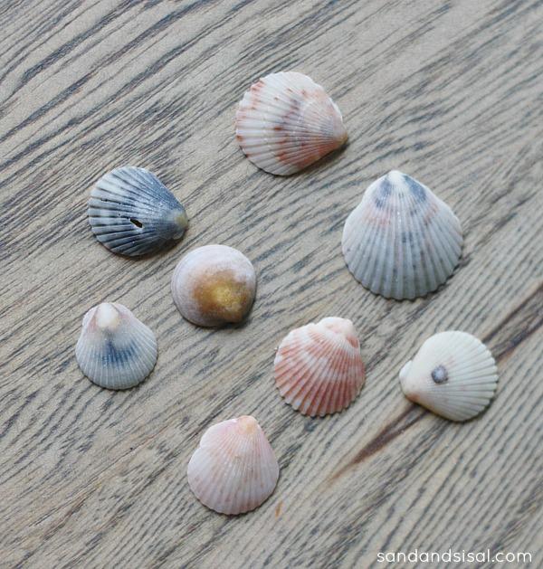 small seashells