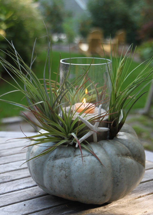 Coastal Pumpkin Centerpiece