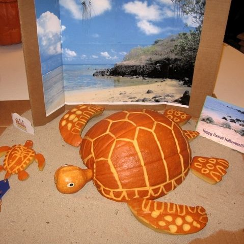 Sea Turtle Coastal Pumpkin