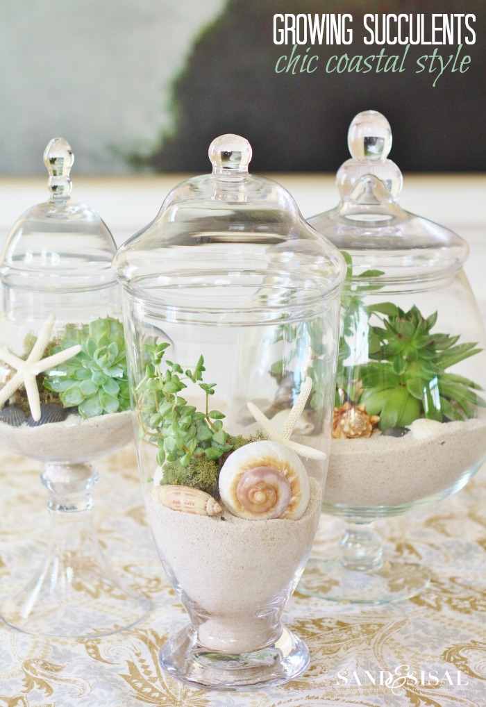 Growing Succulents in Apothercary Jars - Chic Coastal Style