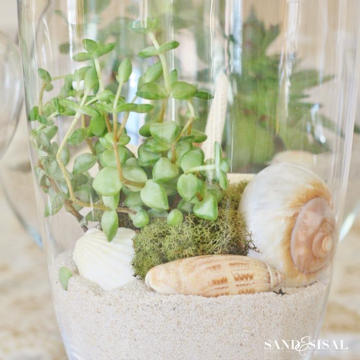 Growing Succulents - Coastal Style