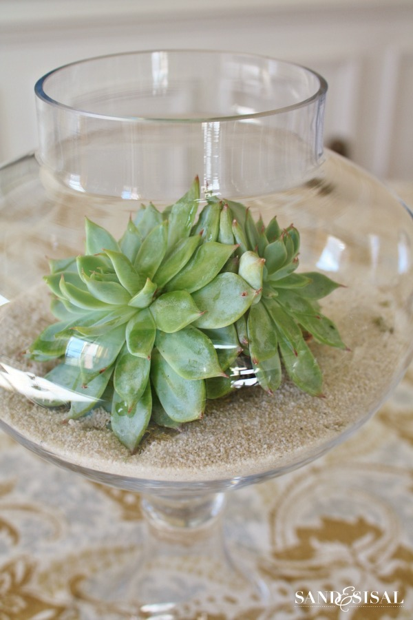 Growing succulents in sand