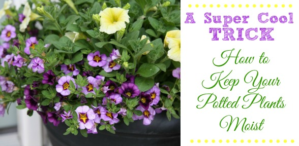How to Keep Potted Plants Moist