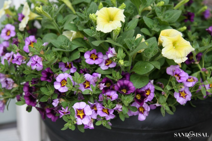 How to maintain moisture in potted plants