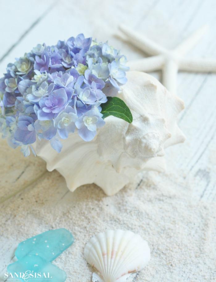 Hydrangeas and shells