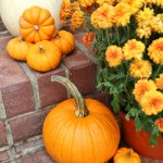 Baby Boo Pumpkins and mums
