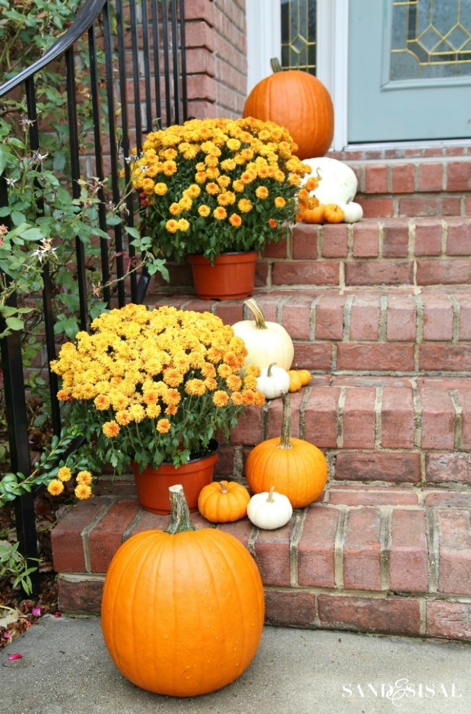 Orange mums with white and orange pumpkins