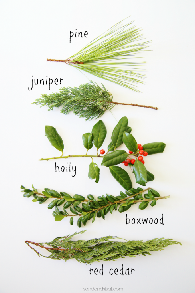 Holiday Everygreens - These evergreens are perfect for Christmas Wreaths, swags, garland and more!
