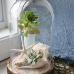 Coastal Cloche Ideas - Shells and succulents