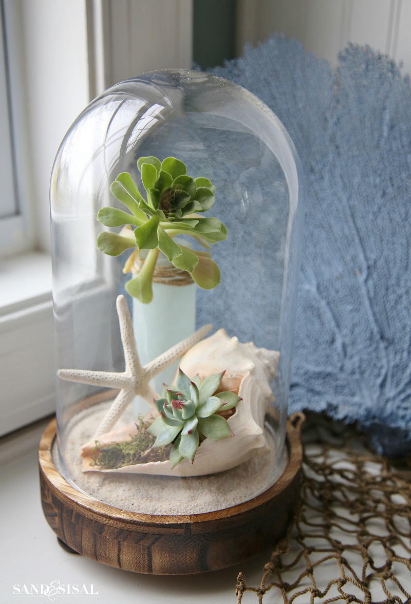 Coastal Cloche Ideas - Shells and succulents