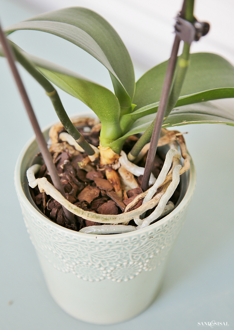 How to grow orchids. This is a great guide for beginners!