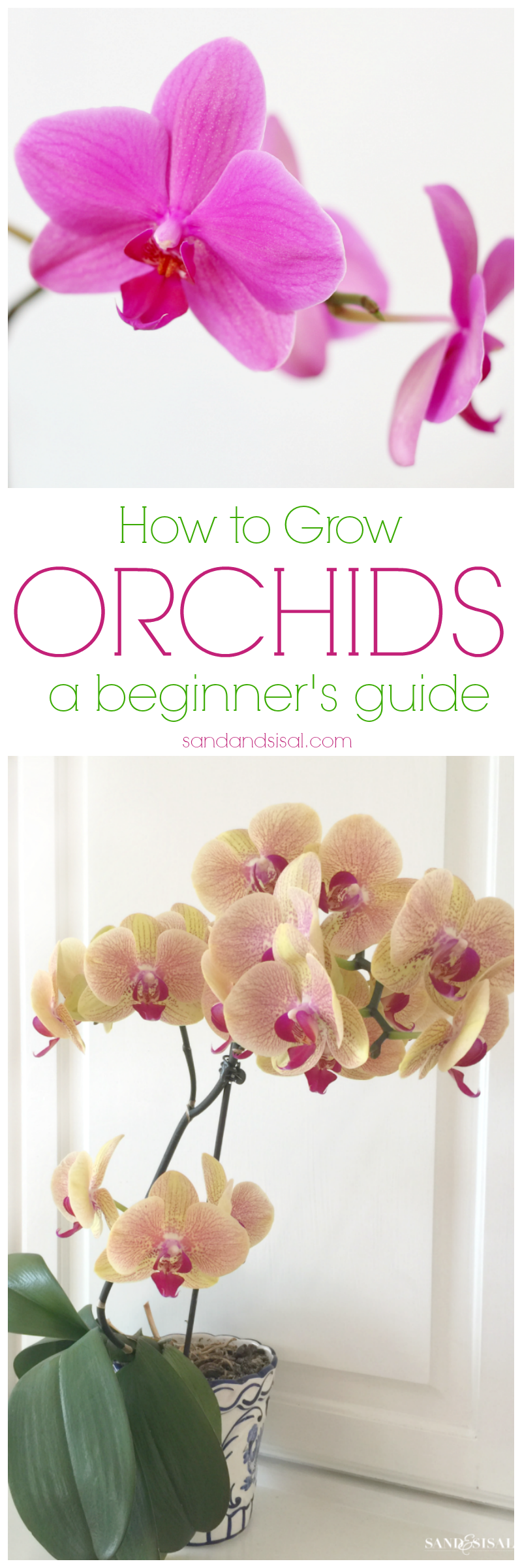 How to Grow Orchids - A beginner's guide