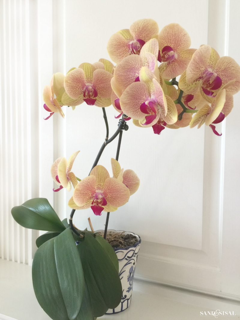 Yellow Orchids - Orchids are actually EASY to grow and are so rewarding with blooms that can last for months! Once you read these easy tips, How to Grow Orchids - a beginner's guide, you will be hooked on orchids forever!