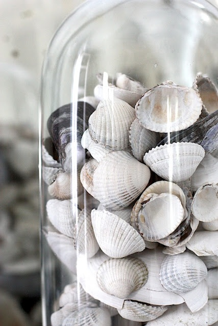 how-to-decorate-with-shells: Capture a bit of summer under a cloche or glass bell jar. Explore these beautifully chic coastal cloche decor ideas for your home.