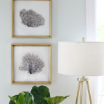 DIY Framed Sea Fans – Adding Coastal Glam to Any Room