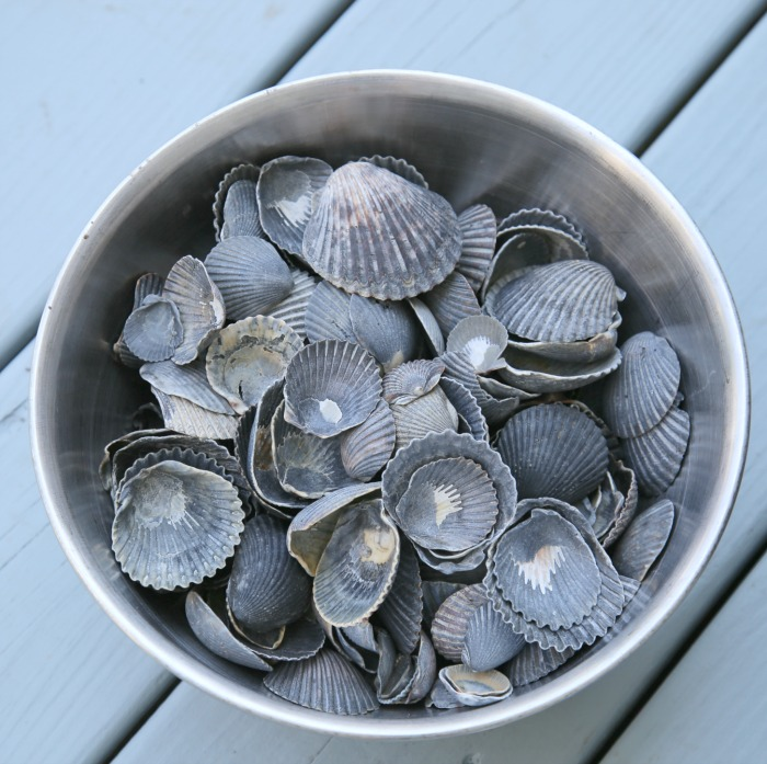 Black Scallop Shells - DIY Shell Planter
