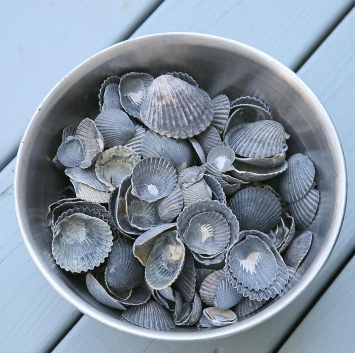 Black Scallop Shells - DIY Shell Planter