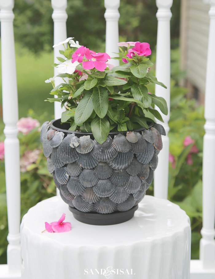 DIY Seashell Planter - an easy shell craft that will hold up to water and hot summer days. c4a.bc9.myftpupload.com