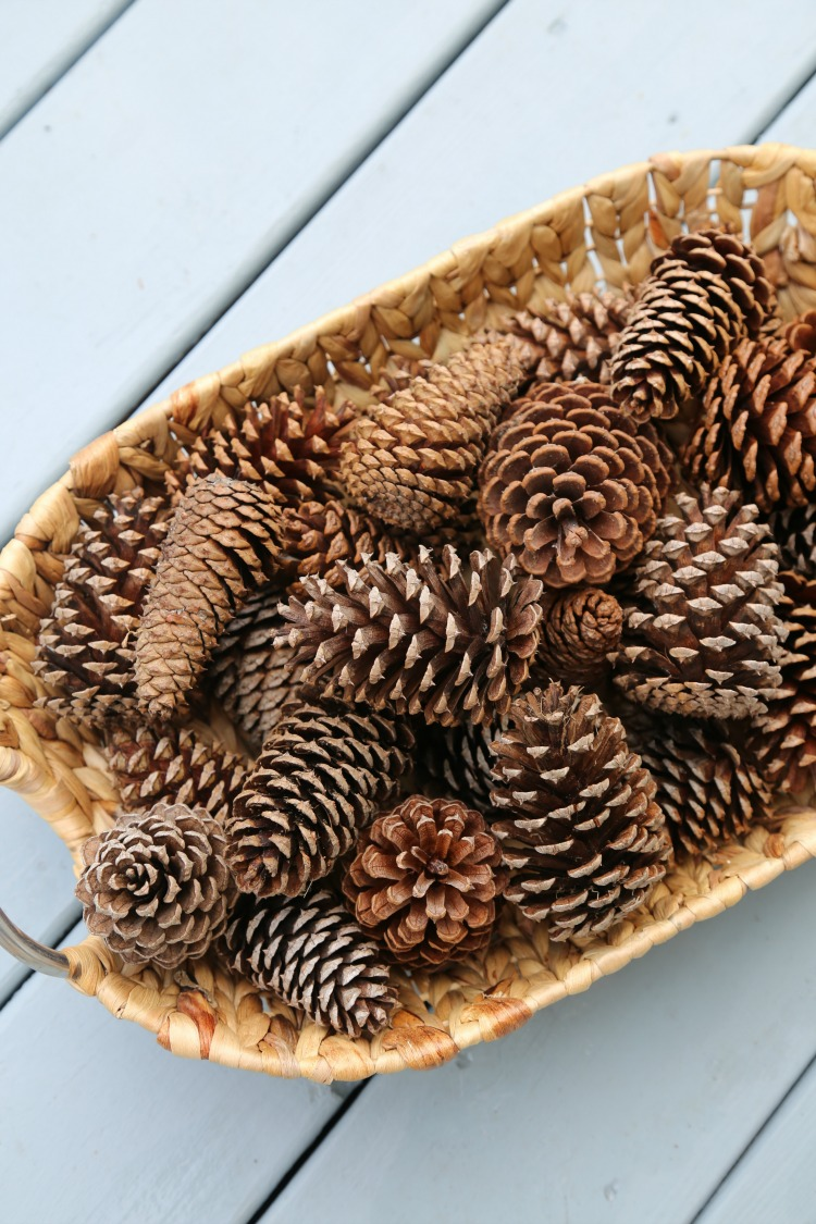 basket-of-pinecones. Learn How to Bleach Pinecones.