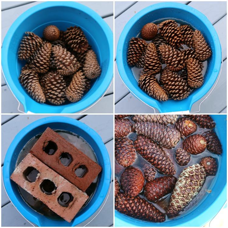 bleaching-pinecones