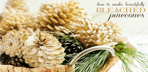 how-to-make-beautifully-bleached-pinecones-slide